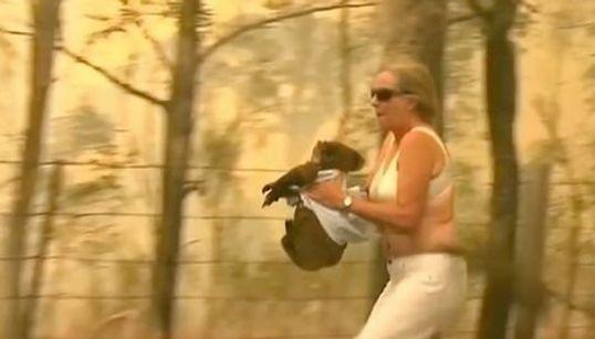 大火傷のコアラを救うため、燃え盛る炎の中シャツを脱いだ。勇敢な女性に「ヒーロー」と賞賛の声