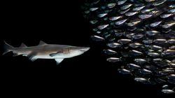 Le sardine sono riuscite a battere la Bestia sulla