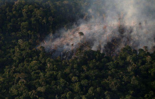 Visão aérea de um pedaço da região amazônica atingida por