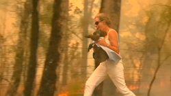 El rescate de un koala en los incendios de