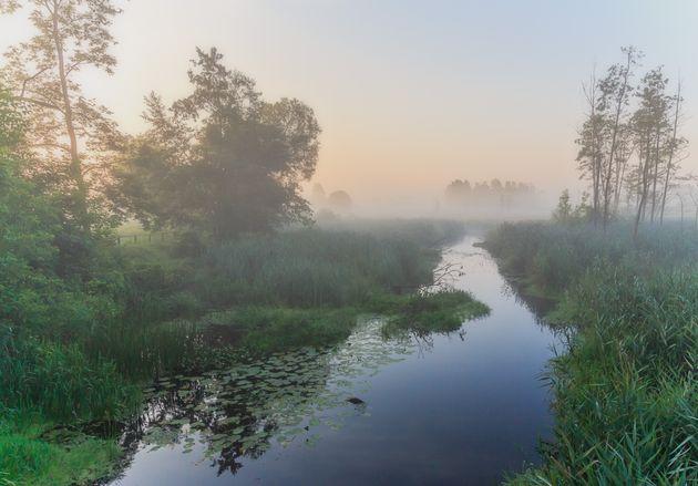 Δάσος Μπιαλοβιέσκα,