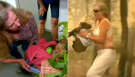 Burnt Koala Reunited With Woman Who Saved Him From Bushfires With Shirt Off He Own