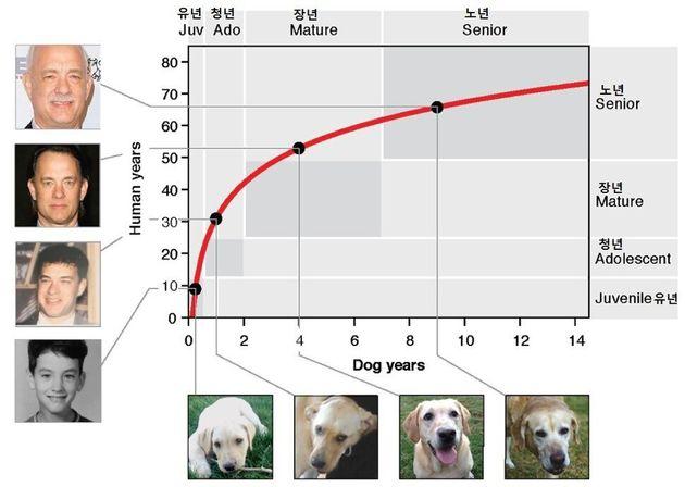 분자 차원의 노화로 환산한 개와 사람의 나이. 첫 두 살까지 개의 성장이 사람보다 매우 빠른 것을 알 수 있다. 티나 왕 외 (2019) '바이오리시브'