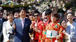 일본을 뒤흔드는 아베의 벚꽃 놀이 스캔들