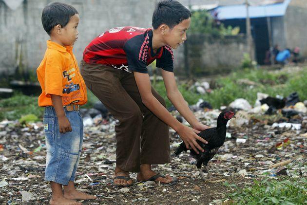 Ινδονησία: Αντικαθιστούν τα iphone και τις έξυπνες τηλεοράσεις με κότες και