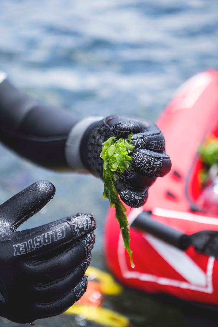 InnoVactiv, qui fabrique des ingrédients à partir d'algues pour l'industrie alimentaire, cosmétique et pharmaceutique, a conclu une entente d'approvisionnement avec Océan de saveurs.