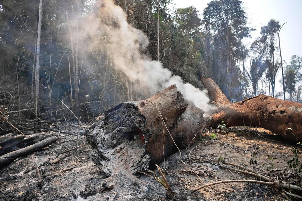 Smoke billows from the burning trunk of a tree in the Amazon on August 24, 2019. Official figures show...