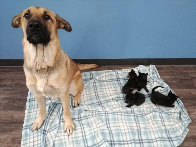Serenity and the kittens she saved from the cold at Pet and Wildlife Rescue in Chatham-Kent,