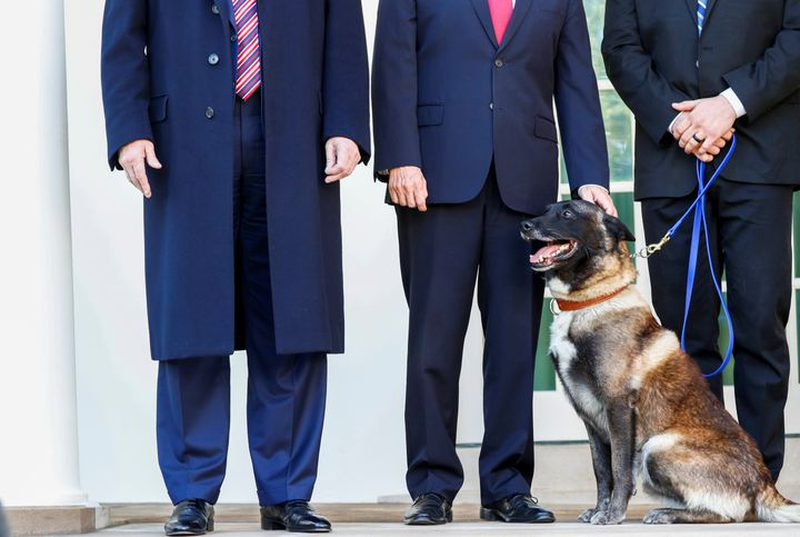 Vice President Mike Pence pets Conan, the U.S. military dog that was part of and was injured in the U.S. raid in Syria that k