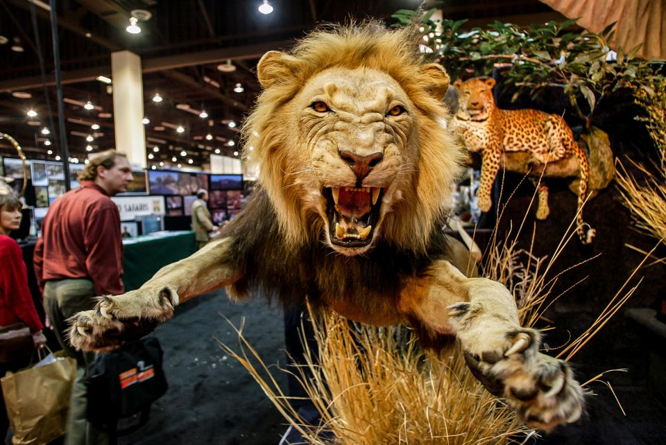 Safari Club International holds an annual convention in Reno, Nevada. Ben Cassidy, a former senior...