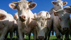 Un agriculteur a-t-il vraiment été condamné pour l'odeur de ses