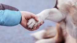 動物虐待防止策を強化 アメリカで連邦法が発効
