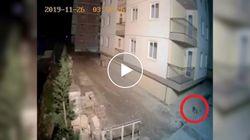 Il sisma si abbatte sull'Albania. Il cane scappa terrorizzato prima della scossa