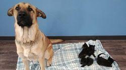 Ontario: un chien errant sauve du froid des chatons