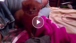 Trova un gattino abbandonato e lo adotta. Ma dopo due mesi scopre che è un puma