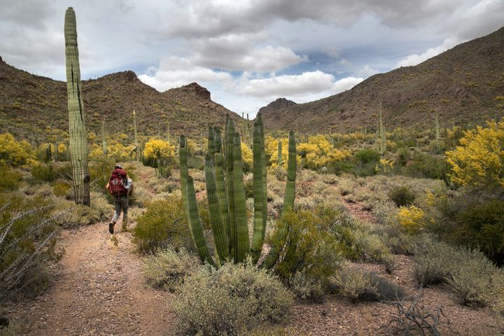 Scott Warren, a volunteer for the humanitarian aid organization No More Deaths, walks into Organ Pipe Cactus National Monumen