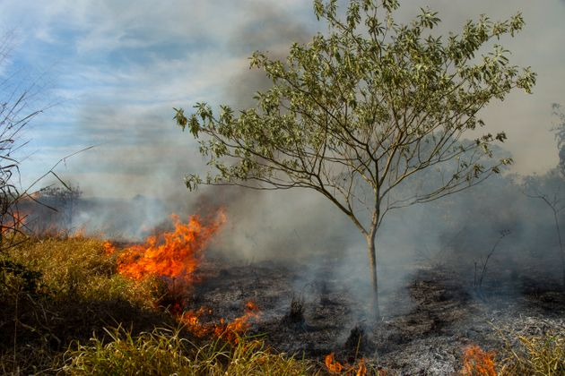 Burning pasture in Brazil on dry
