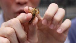 昆虫食の世界に体当たりで挑んだ。コオロギ、サソリ...本音100%の感想は?