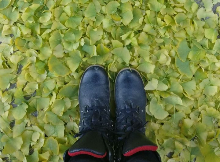Fall leaves make gray sidewalks less ... gray.