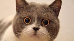 Yahoo!が告白…「『ググる』と言ってしまう」。衝撃の事実が「いいにくいことを言う日」に続々と明らかに