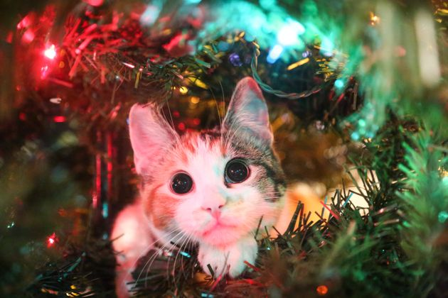 Cats Are Already Going For The Christmas Trees And Its Carnage