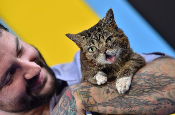"""Lil Bub arrives at the premiere of EuropaCorp's """"Nine Lives"""" at TCL Chinese Theatre on Aug. 1, 2016, in Hollywood, California"""