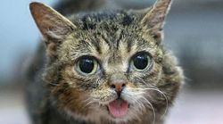 '메롱 고양이' 릴 버브가 무지개다리를
