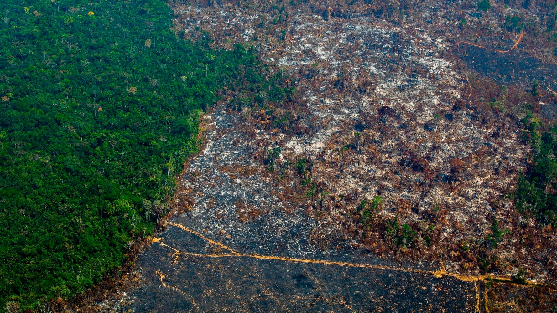 How Politicians And CEOs Could Face Criminal Charges For Environmental Destruction