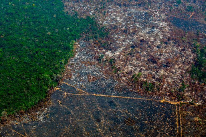 Deforestation in Nascentes da Serra do Cachimbo Biological Reserve in Altamira, Para state, Brazil, in the Amazon basin.