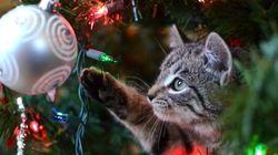 Οδηγός «επιβίωσης» χριστουγεννιάτικου δέντρου από την γάτα