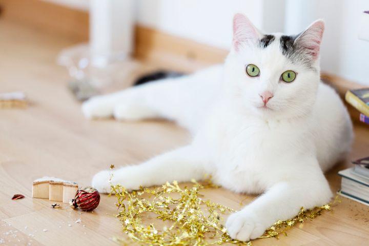 Η γάτα κατέστρεψε τα στολίδια.