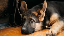 Pensionato muore solo in casa. Il cane veglia su di lui per 8