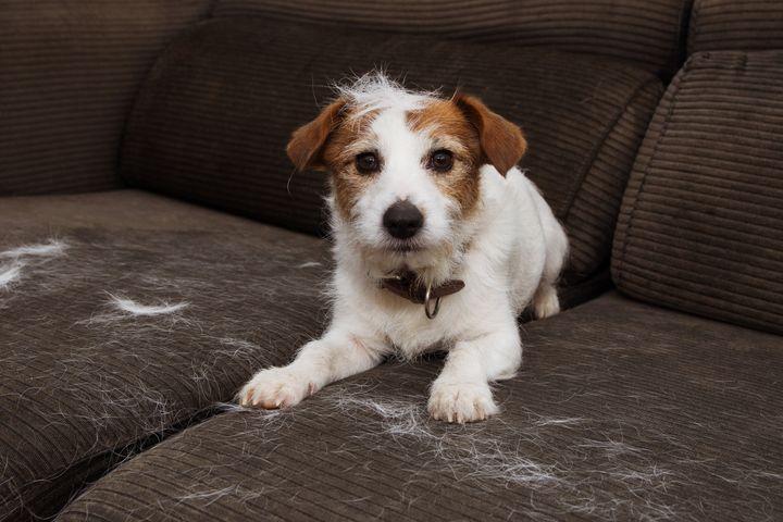 Ocho trucos para quitar los pelos de tu mascota de los muebles y la ropa |  El HuffPost Life
