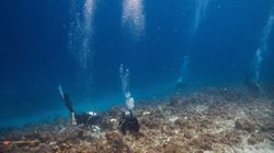 Υποβρύχια ηχεία ζωντάνεψαν κοραλλιογενείς