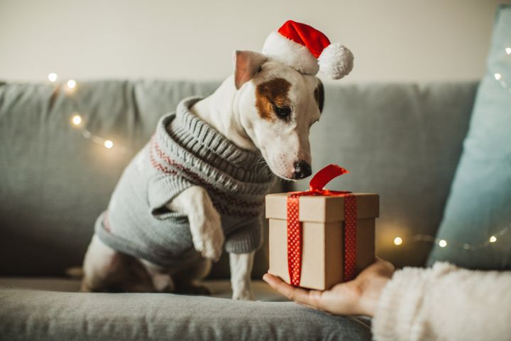 Young woman celebrating New Year at home with her dog. Dog wear costume, she giving present to her dog