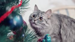 Como montar uma árvore de Natal segura se você tem pet em
