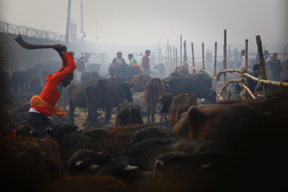 Τελετουργικές σφαγές χιλιάδων ζώων στο Νεπάλ για το φεστιβάλ Γκαντιμάι παρά την