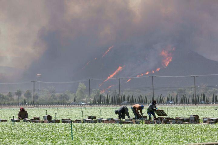 Jornaleros trabajando mientras avanza un incendio en las colinas del fondo, en