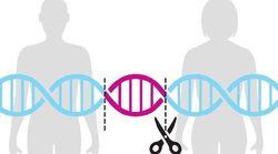 ゲノム編集して妊娠、禁止へ デザイナーベビー懸念