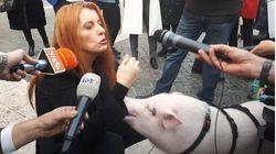 Brambilla con un maialino davanti a Montecitorio: