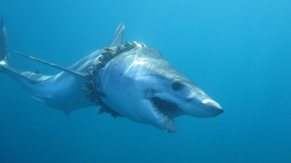 """The majority of the marine entanglement deaths involve abandoned, lost or discarded """"ghost""""..."""