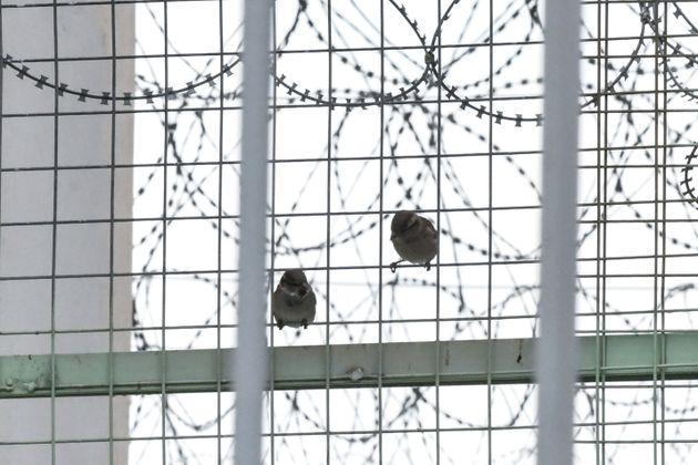 ΕΛ.ΑΣ.: Σκηνοθέτησαν βασανισμό κρατουμένου από