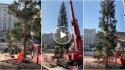 Anche Londra ha il suo Spelacchio. L'albero di Natale inglese è un