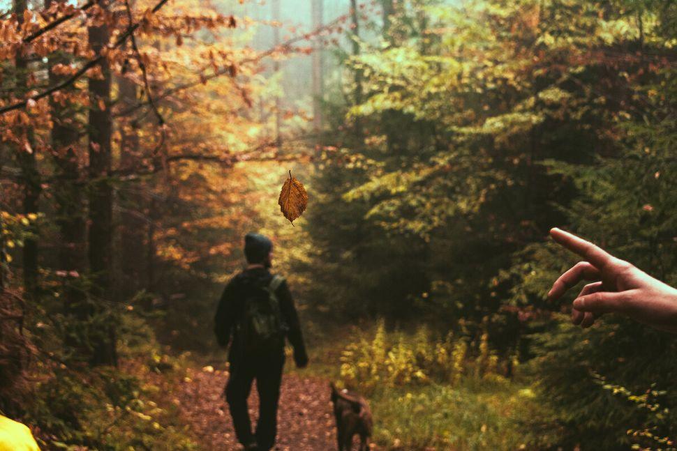 Κάθε στροφή και νέο κάδρο.Παρθένο δάσος Φρακτού, Παρανέστι Δράμας.