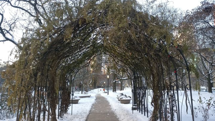 One of my favourite parts of my morning walk is though this archway in St. James Park.