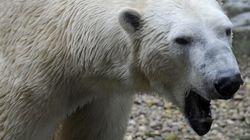 Le zoo d'Amnéville épinglé pour avoir tronçonné le cadavre d'un