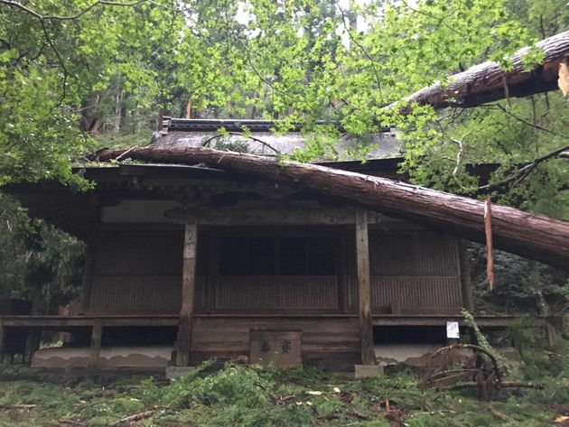 巨木が倒れて半壊した金堂=高山寺提供