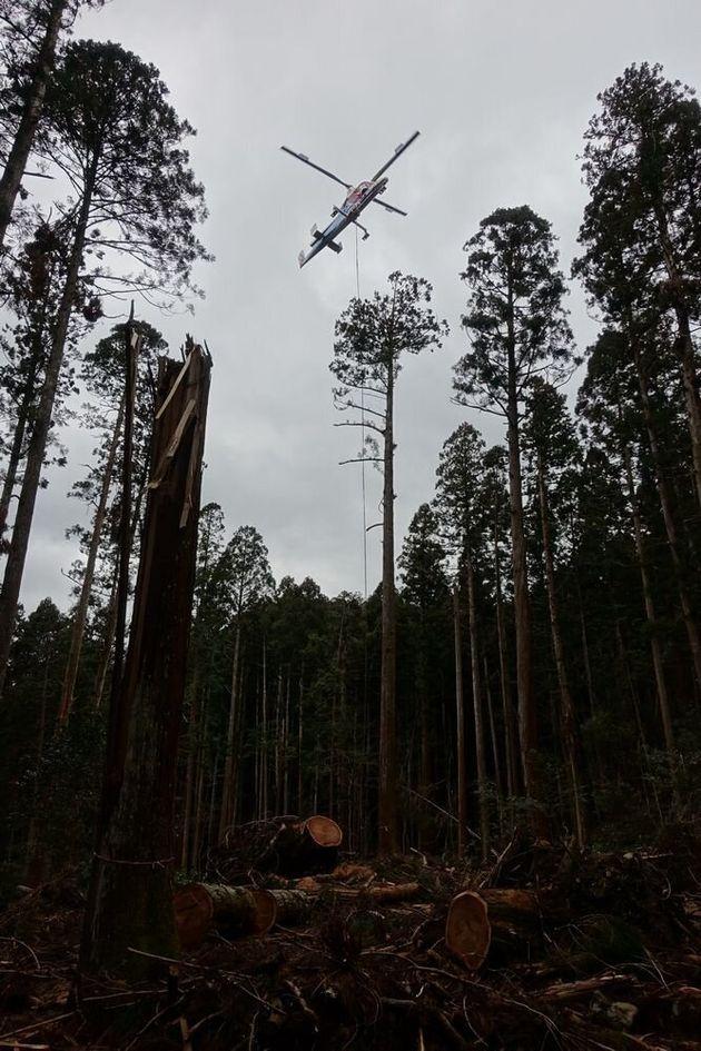 ヘリコプターによる倒木の搬出作業=高山寺提供