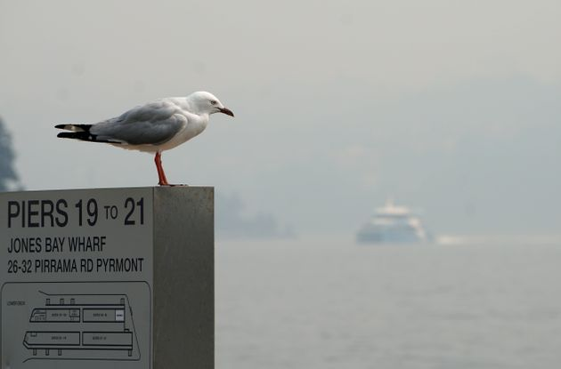 A seagull perches on a sign as a ferry can be seen through smoke haze from bushfires, in Sydney, Australia,...
