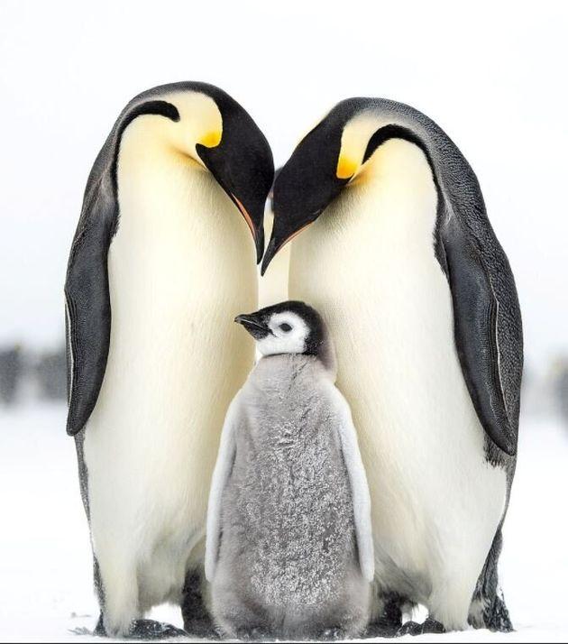 국제자연야생사진협회가 선정한 올해의 '새'